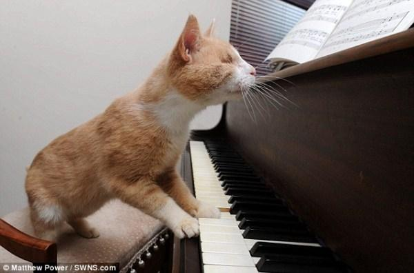 Chu meo mu nhung me choi piano